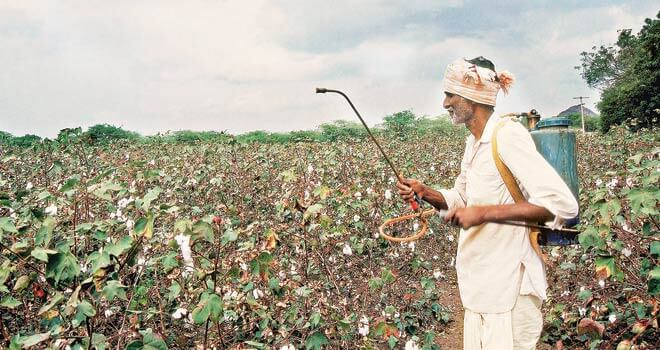Cotton farmer in India using pesticides on crop.